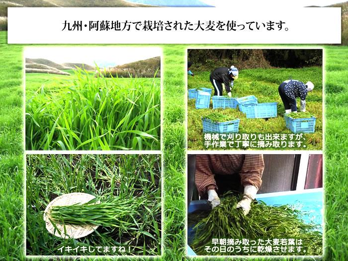 九州・熊本阿蘇地方で栽培された大麦を使っています。